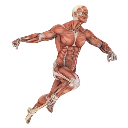 anatomie mens: Man lag figuur Stockfoto