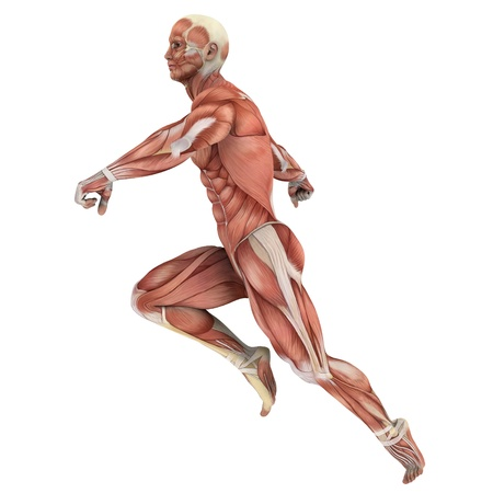 transparent body: male lay figure