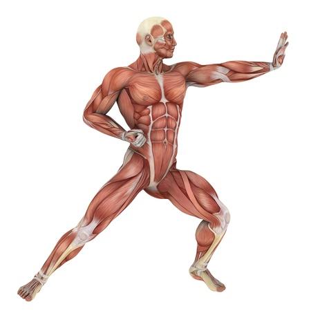 male lay figure  photo