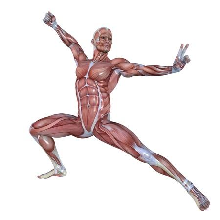sports medicine: male lay figure