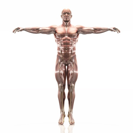 human body 免版税图像