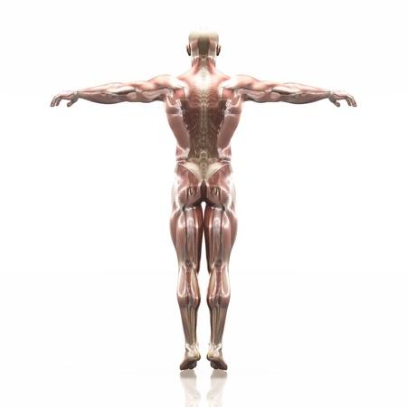 human body Zdjęcie Seryjne