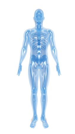 scheletro umano: Scheletro