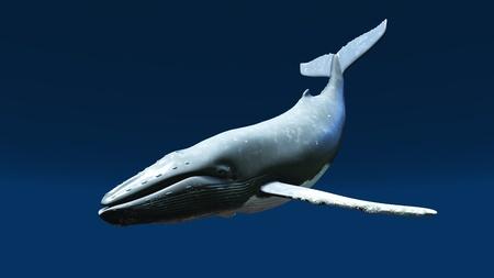 ballena: ballena Foto de archivo