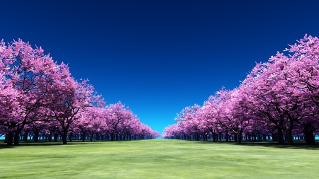 forest path: cherry trees Stock Photo