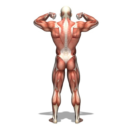 transparent male anatomy: human body Stock Photo