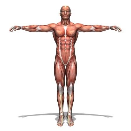 anatomie mens: lichaam