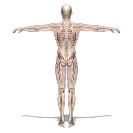 skeletons: human body Stock Photo