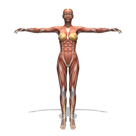 human body Stock Photo - 13385769