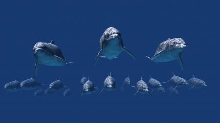 dolphin Stock Photo - 14365914