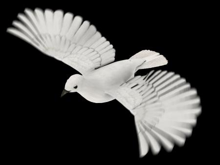 white dove  Stock Photo - 15747834