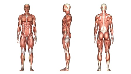 scheletro umano: corpo umano Archivio Fotografico
