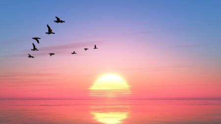 migratory birds: sunrise