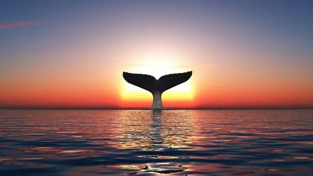 baleine: baleine