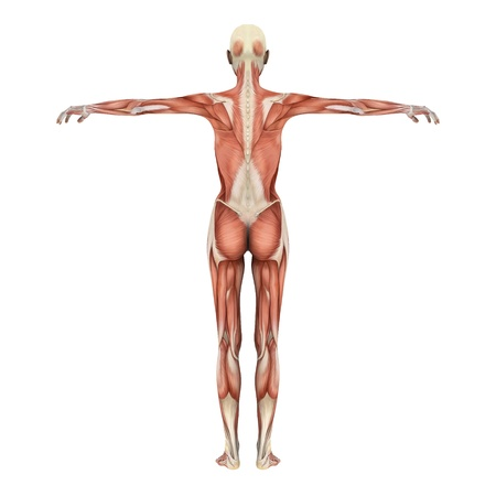 human body 版權商用圖片