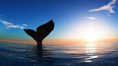 クジラ 写真素材