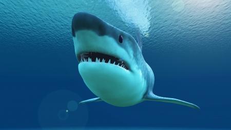 white shark: shark
