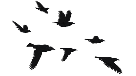 plural number: silhouette of birds