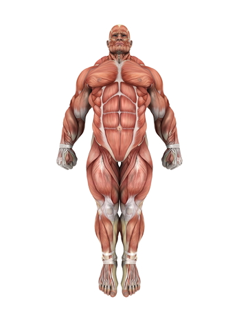 human body: human body Stock Photo