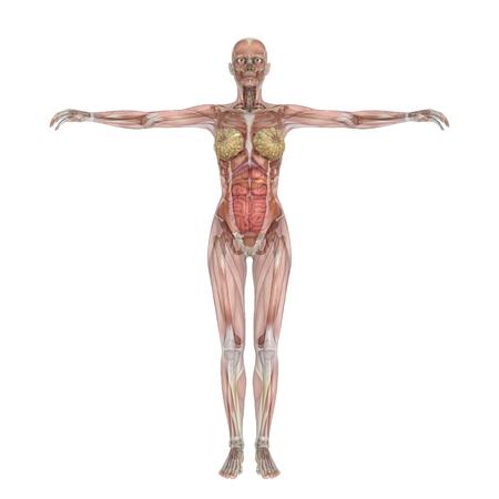 human body Stok Fotoğraf