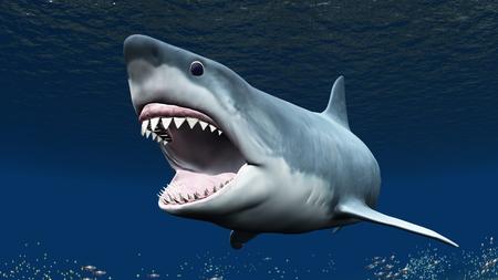 shark: shark