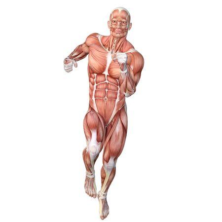 human body Standard-Bild