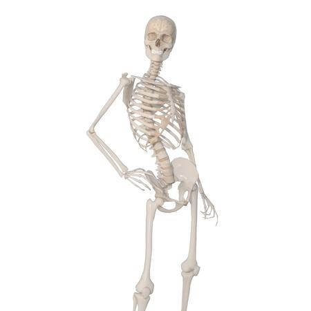 skeleton Standard-Bild