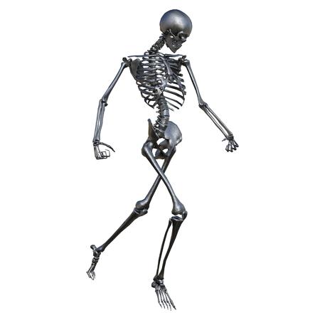 skelet  Stockfoto