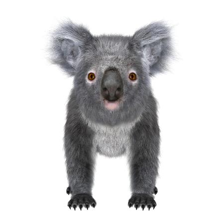 lia: koala Stock Photo