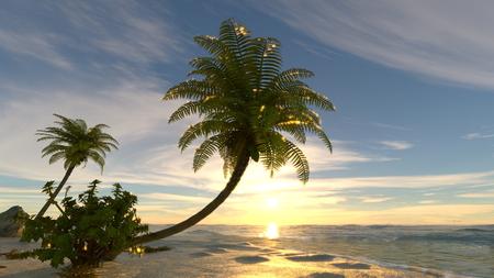 island: island