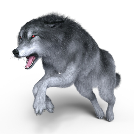 canid: wolf Stock Photo