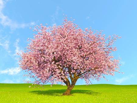 체리 나무 스톡 콘텐츠 - 69281534