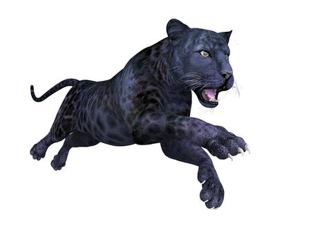 mottle: black panther on white background Stock Photo