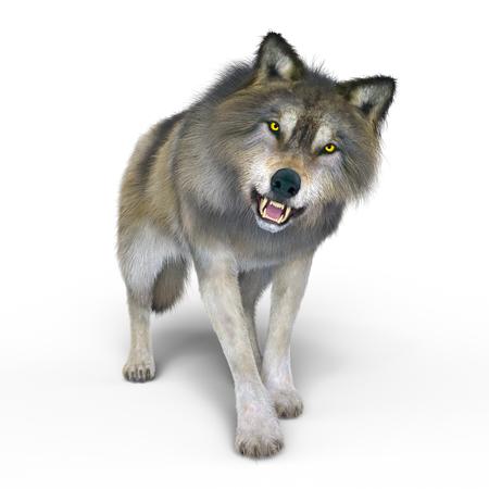 wolf Reklamní fotografie