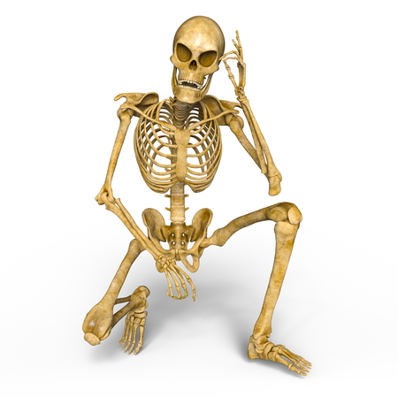 skeleton Stock Photo