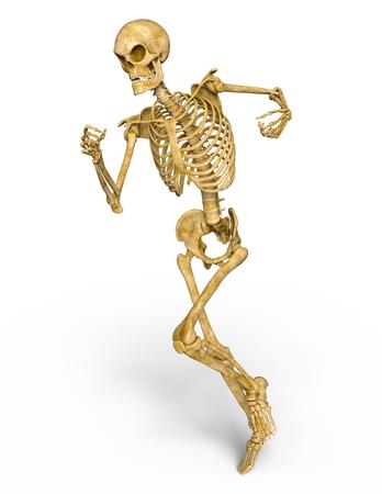Skelet Stockfoto - 88483327