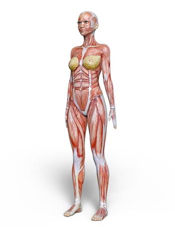 female lay figure