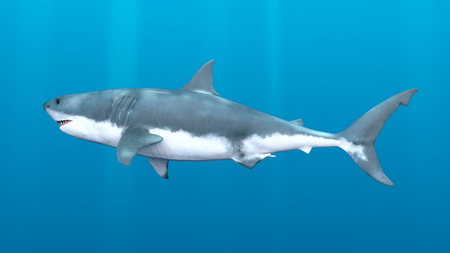 3D CG rendering of shark