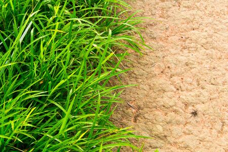 Grass and soil background photo
