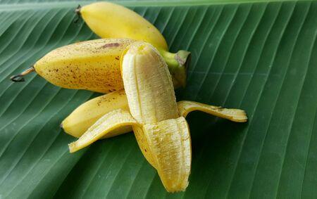 Lady finger banana with banana leaf background. Stock Photo