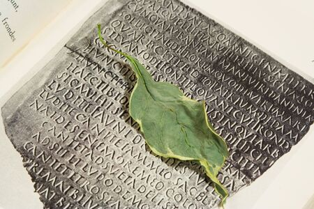 latin language: dead leaf on the page of book with inscription in Latin language