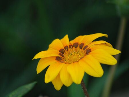 Beautiful photo of a yellow and brown flower stock photo