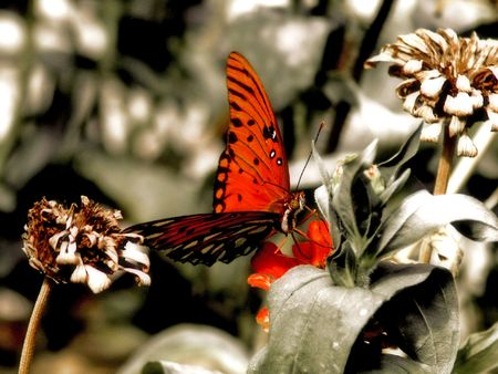 Abeautiful butterfly with enhanced reds set against a bleak background! Stock Photo
