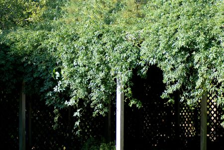 hutch: A photo of ivy growing and taking over a small garden hutch