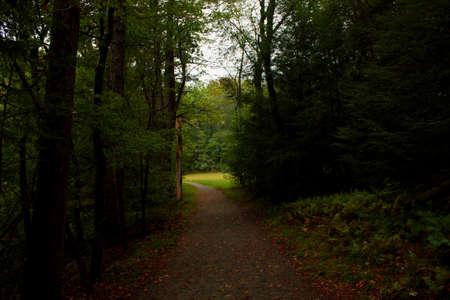 森の中のパス