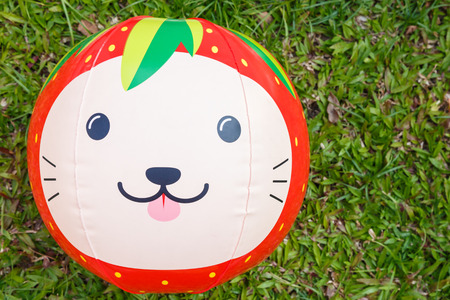 fruit ball animal cat face photo