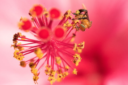 Close up bee on stamen Stock Photo