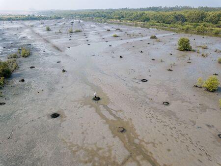 Withered land at wet land at Penang.