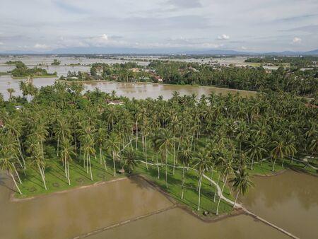 Aerial view coconut plantation surround by water at Penaga, Pulau Pinang.