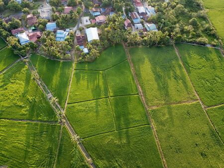 Drone view amazing green scenery at paddy field beside kampung house at Bukit Mertajam, Penang.